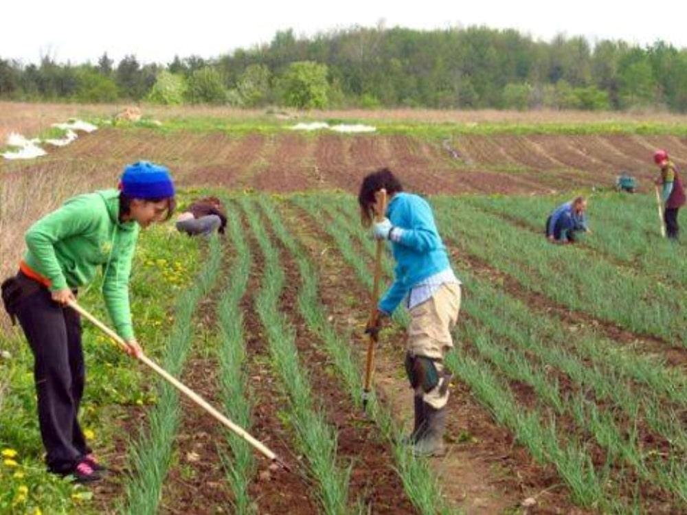 Feed_It_Forward_Farm_Working